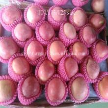 Importatrice de mangou de Singapour fruits frais de pomme à vendre