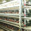 Gaiola de frango para venda / bateria gaiolas galinhas poedeiras / equipamento avícola