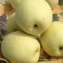 Ya pear