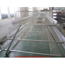 youth chicken wire cage