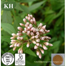 Herbal Eupatorii Extract 20: 1 10: 1 5: 1 / Eupatorium Fortunei Extract