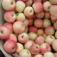 Frische rote Gala Apple Top Qualität von Golden Supplier