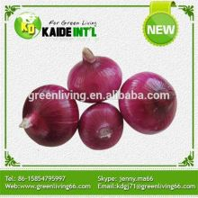 Fresh Red Onion with Lowest Price