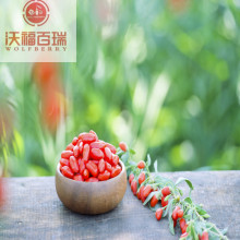 Goji berry / Wolfberry / Hot goji berry jualan