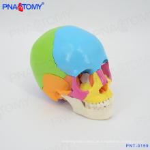 PNT-0159 menschlichen farbigen Schädel Modell, 22 Teile Lebensgröße