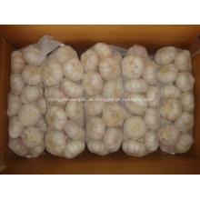 In der großen Nachfrage Jinxiang normaler weißer Knoblauch