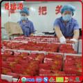 Goji berries where to buy local store goji berries plants picture goji berries plants from home depot
