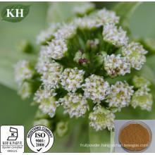 Butterbur Rhizome Extract with Petasins 15%