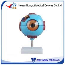 Modelo de ojo gigante HR-316