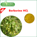 Berberis Aristata 추출물