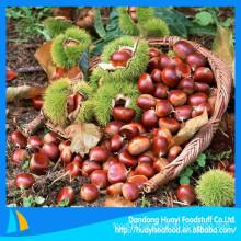 New crop high quality fresh green chestnut