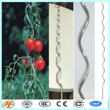 apoio de plantas stakes espiral de tomate