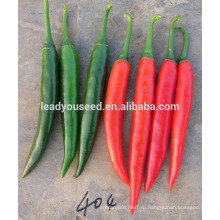 MP271 Hongduan длина 15см темно-зеленый гибрид пряные цены семян перца