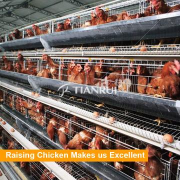 Una jaula de batería de pollo de capa tipo para granja de aves de corral