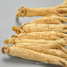 best quality Natural ginseng extract ginseng buyers