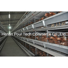 New Frame Layer Chicken Cage System (Euro Standard)