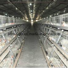 Яйцо Слой Курицы Клетке Из Китая