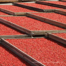 Bayas de Goji rojas secadas al por mayor orgánicas certificadas a granel