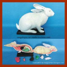 Tiermodell für Wholsale Kaninchen Anatomie Modell