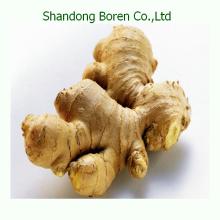 2015 Shandong Neuer chinesischer frischer Ingwer