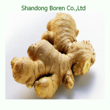 2015 Shandong New Chinese Fresh Ginger