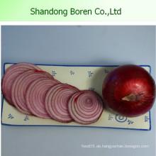 Niedrigster Preis Frische Rote Zwiebel Frische Zwiebel aus China