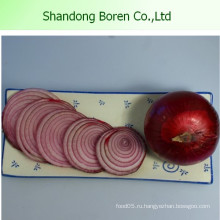 Самый свежий красный лук свежий лук из Китая