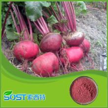 China manufacturer supply new bulk high quality beet root powder