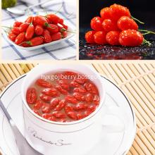 Eu Standard Dried Goji Berry with Low Moisture