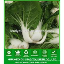 NCC02 Xiami fábrica de sementes de couve chinesa, sementes de pak choi