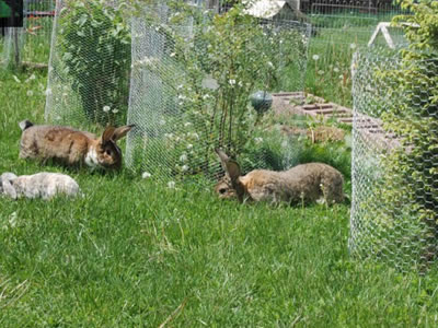 plant-protection-rabbit-fence