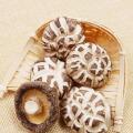 Low Price Dried White Flower Shiitake Mushroom