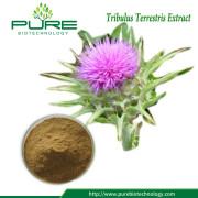 Tribulus Terrestris Fruit Extract Pulver 40% 90% Saponiner