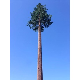 Telecom Pine Tree Tower
