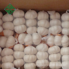 wholesale fresh style pure white garlic price