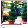 China Bonsai Wholesale Large Outdoor Bonsai Trees