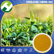 (초콜릿 Gallate) 녹차 추출 물 EGCG 10 ~ 99 %HPLC