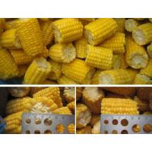 Sweet Corn Kernel Frozen Sweet Corn Chinese Supplier
