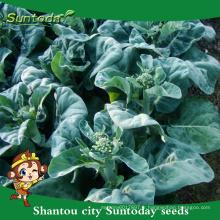 Suntoday assortiment de plants de légumes F1 kale kailan Mustard chou hauts temps huile de graines noires santé graines à vendre (35002)
