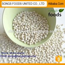 Empresa comercial chinesa para exportar feijão branco egípcio
