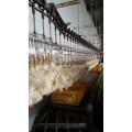 Transportador de cajas en la recepción de aves vivas