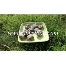Cogumelo de Shiitake seco secado da haste do corte da haste vegetal secada