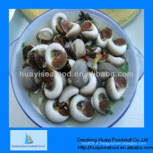 Escargots vivants fraîchement mouillés