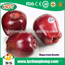 2015 New Crop Fresh Red Apples From China