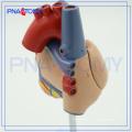 PNT-0400 grandeur nature anatomique-modèle de coeur humain / modèle médical de coeur de PVC