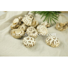 Good Quality White Flower Shiitake Mushroom