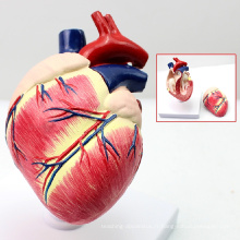 MODÈLE VÉTÉRINAIRE DE GROS 12008 Animal Anatomical Life Size 2 pièces Chien en plastique Modèle anatomique de coeur