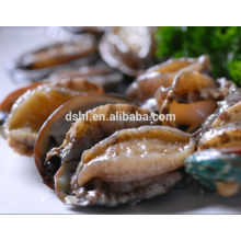 Cooked frozen Abalone with shell