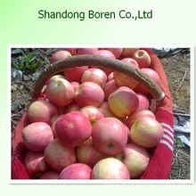 2015 Royal Qinguan Apple Import aus China