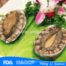 Factory price good quality abalone